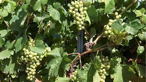 Foto de La nutrici�n org�nica en fermentaci�n alcoh�lica, imprescindible para la calidad de los vinos