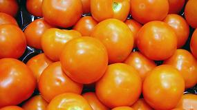 Fotografia de La exportaci�n de frutas y hortalizas crece en el primer trimestre un 7,5% en volumen y un 9,9% en valor