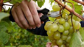 Foto de Tres vidas para la uva