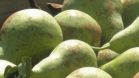 Fotografia de Crecimiento del 10% en volumen y 16% en valor de la exportaci�n espa�ola de frutas y hortalizas en abril