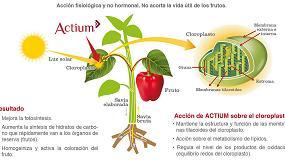 Foto de Actium consigue un potente efecto activador del color de los frutos, tanto en frutales como en hortícolas