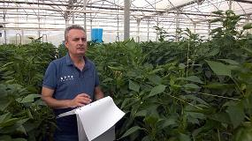 Picture of Entrevista a Javier Noguera, Pepper Breeder de HM�Clause