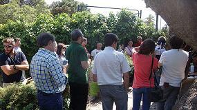 Foto de Alicante presencia la estrategia TreeCare de Syngenta para luchar contra el picudo rojo de las palmeras