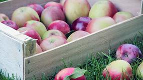 Foto de El mercado de frutas y hortalizas en Alemania, un referente para Espa�a