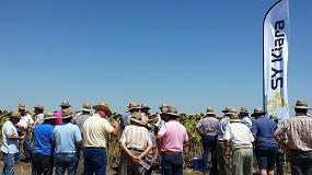 Foto de Más de 500 agricultores asisten a las jornadas de campo de girasol de Syngenta en Andalucía