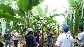 Foto de Daymsa presenta en Costa Rica sus bioestimulantes para banano