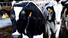 Picture of La liquidaci�n de la tasa l�ctea s�lo afectar� al 0,78% de los ganaderos que tienen entregas declaradas