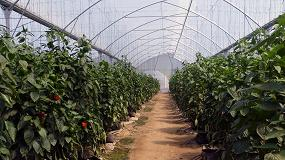 Foto de Invernaderos para climas tropicales de Ulma Agrícola