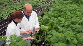 Foto de Neiker-Tecnalia, premiado en Chile por investigar la adecuación del cultivo de patata al cambio climático