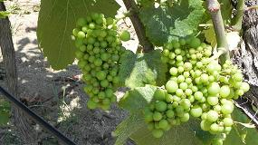 Fotografia de Cooperativas Agro-alimentarias prev� una cosecha de 41,5 millones de hl de vino y mosto en Espa�a