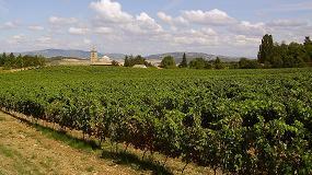 Fotografia de APAG Extremadura ASAJA prev� que la producci�n de vendimia disminuir� hasta un 30%