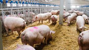 Foto de La industria del porcino español, un sector en constante evolución