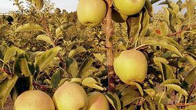 Foto de Fertilización nitrogenada en manzano: compromiso entre producción y calidad