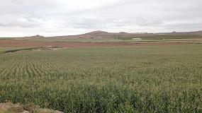 Foto de Riego por goteo subterráneo en cultivos extensivos en España: experiencia en cultivo de maíz