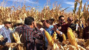 Foto de Syngenta muestra sus ensayos con variedades de maíz para ciclos medios y cortos con tecnología Artesian