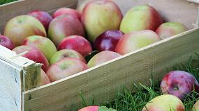 Foto de Jornada sobre la manzana de montaña en Prades