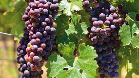 Foto de Gran subida de los vinos chilenos en China, argentinos en Reino Unido y estadounidenses en Alemania