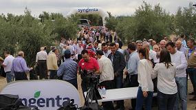Foto de Syngenta muestra en campo cómo un olivar bien tratado da producciones altas año tras año