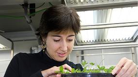 Picture of Mejoran la calidad de la lechuga modificando las condiciones de cultivo
