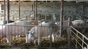 Foto de COAG denuncia que cada explotación de porcino pierde 3.800 euros a la semana