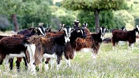 Foto de El Ministerio de Agricultura, Alimentación y Medio Ambiente autoriza el uso del logotipo 'Raza Autóctona' a la Asociación de Criadores de Ganado Caprino de Raza de Guadarrama