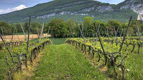 Foto de El MAGRAMA publica la resolución sobre la aplicación del régimen de autorizaciones de plantaciones de viñedo en 2016