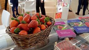Fotografia de Grufesa anuncia en Fruit Logistica que contar� con una producci�n de fresas �premium�