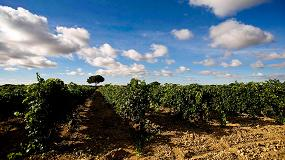 Foto de D�cimo aniversario de la Ruta del Vino Ribera del Duero