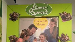Foto de Flower Sprout se convertir� en Kalettes