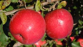 Foto de Productores de pera y manzana ponen en marcha una campaña para potenciar el conocimiento de los productos de origen nacional