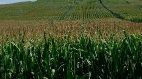 Foto de Próxima XV Jornada intercomarcal del maíz