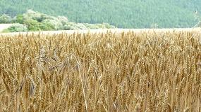 Foto de Una nueva maleza pone en jaque la autorización de maíz transgénico en el estado