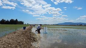 Foto de El cultivo de arroz en el Delta del Ebro produce 10.500 toneladas de metano anuales