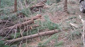Foto de Aceptadas las reivindicaciones fiscales de los propietarios forestales gallegos