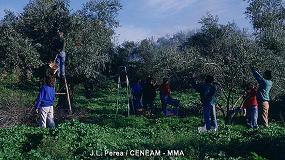 Foto de La séptima edición del libro 'La poda del olivo' recoge conocimientos técnicos y científicos sobre experiencias