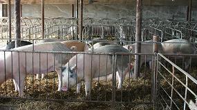 Foto de España, cuarto proveedor de porcino en Japón