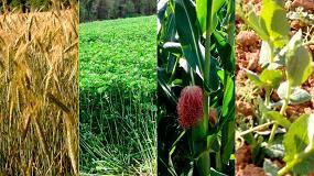 Foto de El IRTA colabora en una jornada dedicada a los beneficios de las rotaciones en cultivos extensivos