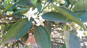Foto de El IRTA estudia el impacto de insecticidas y plaguicidas sobre las abejas