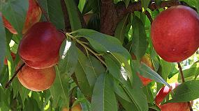 Foto de Asaja, COAG y UPA promueven el contrato de compraventa de fruta