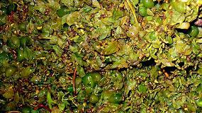 Foto de Suplementos enol�gicos para la generaci�n de aromas diferenciadores en el vino