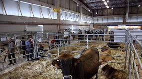 Foto de Las razas bovinas gallegas en peligro de extinción presentan su sello 100% Raza Autóctona en la feria Abanca Semana Verde 2016