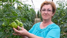 """Foto de El tomate Dumas se consolida en los invernaderos de Almería por su """"fácil manejo, calidad y alta producción"""""""