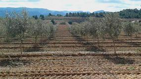 Foto de El IRTA organiza una jornada sobre el riego y la fertilización en olivo