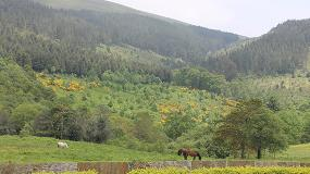 Foto de COSE visita el monte Riobóo, en O Valadouro (Lugo)