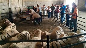 Picture of Ovipor busca la rentabilidad a trav�s de la mejora de la fertilidad en el ganado ovino