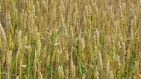 Foto de La producción de cereal en Castilla y León sube un 34% y la rentabilidad, un 4,3%