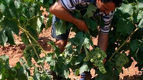 Fotografia de La DO Rioja aprueba las �Normas de Campa�a� para la vendimia 2016