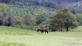 Foto de COSE pide que la investigación sea aplicada para maximizar los resultados de la gestión forestal