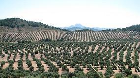 Picture of La rentabilidad del olivar a debate en las jornadas de Asaja-Ja�n