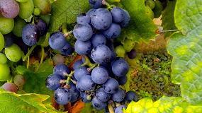 Foto de Vino tinto con resveratrol, fuente de salud